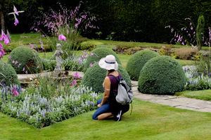 Dierama pulcherrimum budzi wielkie zainteresowanie
