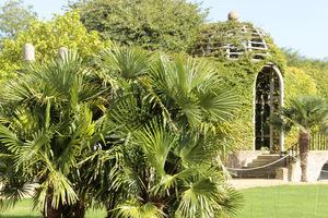 Wielkie palmy w gruncie