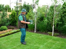 Nawożenie trawnika specjalnym siewnikiem ręcznym