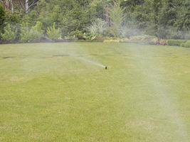 Ratowanie trawnika po urlopie polega głównie na nawadnianiu