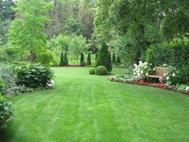 Trawnik w cieniu lepiej wytrzymuje suszę
