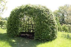 Żywa altana z drzew (mogą być graby, buki itp. drzewa które dają się formować)