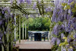Altana pod okapem kwiatów wisterii