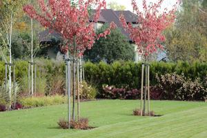 Zdrowe drzewa to wielka zasługa prawidłowego sadzenia i pielęgnacji