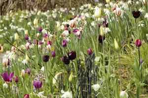 Delikatna kompozycja z bielą, czernią i fioletem