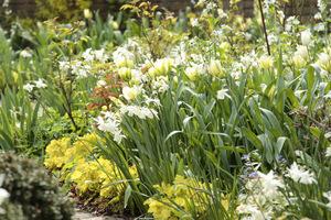 Narcyzy z roślinami o ozdobnych liściach