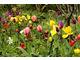 Energetyczna łąka z tulipanów