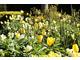 Pastelowa łąka z tulipanów