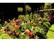 Tulipany i cesarska korona