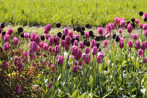 Różne odcienie fioletu