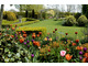 Ideał ogrodu z tulipanami