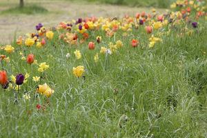 Mieszamy kolory od mocnych, czerwonych i żółtych, dodajemy mocnego fioletu