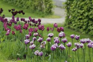 Tulipany w kwadratach jednego koloru, cieniowane
