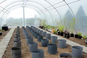Cylindry rozstawione w namiocie, przygotowane do sadzenia