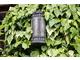 Hedera - zimozielone pnącze