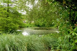 Ciasne otoczenie stawu i bliskość drzew zagrażają równowadze biologicznej stawu