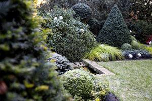 Ogród w większości zimozielony jest najbardziej narażony na niebezpieczeństwo