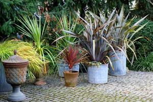 Sprzątam rośliny nie zimujące w gruncie zanim nadejdą mrozy