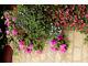 Kaskady kwiatów