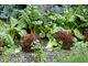 Własne warzywa