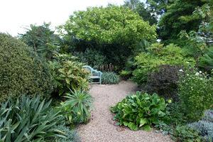 Rośliny architektoniczne  o mocnej, wyrazistej strukturze liści