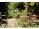 Pelargonie w donicach ustawione na ścieżce w ogrodzie