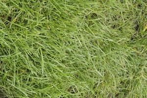 Trawnik - dobre źródło darmowej ściółki