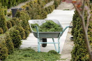 Ściółka (mulcz) korzystanie wpływa na zdrowie ogrodu