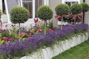 Pienne rośliny liściaste, a pod nimi kwitnące dywany