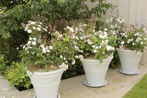 3 donice z jednakowymi różami