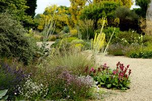 Wybieraj rośliny, które zimują w naszym klimacie, te lubiące słońce sadź w słońcu