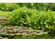 Nad wodą sadź rośliny wodne lub bagienne
