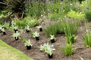 Duże byliny sadzę 1-3 szt/m2, średnie około 5 szt/m2 a małe 10-15 szt/m2