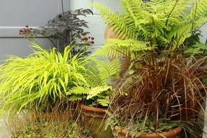 W donicach mogą też być rośliny ozdobne z liści