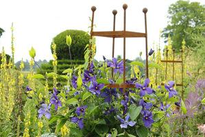Rośliny pnące potrzebują podpór do wspinania