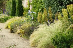 Zwiewne trawy na żwirowym stanowisku