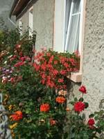 W Wambierzycach nie ma domu bez kwiatów w oknach. Tutaj jeden z najokazalszych parapetów.