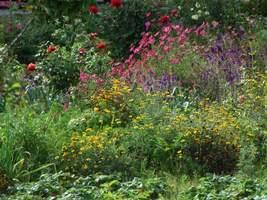 Kompozycja, jak w najwspanialszych angielskich ogrodach