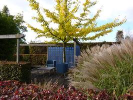 Spojrzenie z innego miejsca na doskonałe zestawienie roślinności i kolorów