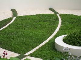 Niespotykana kombinacja trawnika i macierzanek