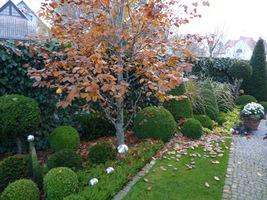 Po tej rozgrzewce czas pokazać liście na trawniku. Od tego powinniśmy zacząć jesienne sprzątanie
