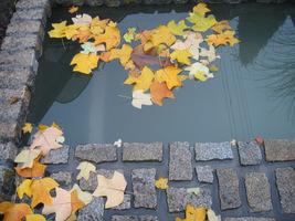 Powinniśmy przede wszystkim usunąć liście, zanim opadną na dno i zanieczyszczą wodę