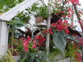 Ciepła szklarenka to idealne miejsce dla egzotycznych roślin, które chcielibyśmy przetrzymać na następny sezon