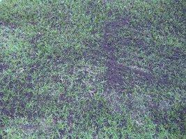 Prawidłowo wykonana wertykulacja zapewni trawnikowi dobry start wiosną