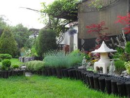 Złe miłego początki, czyli mój ogród kiedyś i dziś - autor Aleksandra Główka