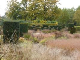 Projekt ogrodu z zastosowaniem ozdobnych traw