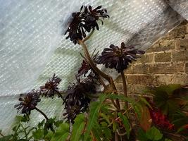 Jeśli mamy problem z utrzymaniem właściwej temperatury, możemy dodatkowo zabezpieczyć rośliny od wewnątrz szklarni folią pęcherzykową