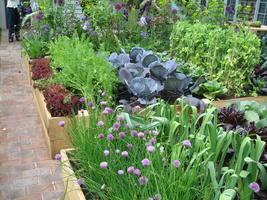 Uprawa w drewnianych skrzyniach jest to bardzo dobrym sposobem na uprawę większej ilości warzyw oraz włączenie dzieci do naszych ogrodowych prac