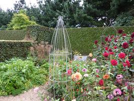 Często jedynym sposobem na uzyskanie zbioru warzyw z własnej działki jest uprawa na rabatach kwiatowych