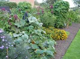 Szukamy wolnego miejsca wśród bylin, przygotowujemy glebę przekopując z kompostem